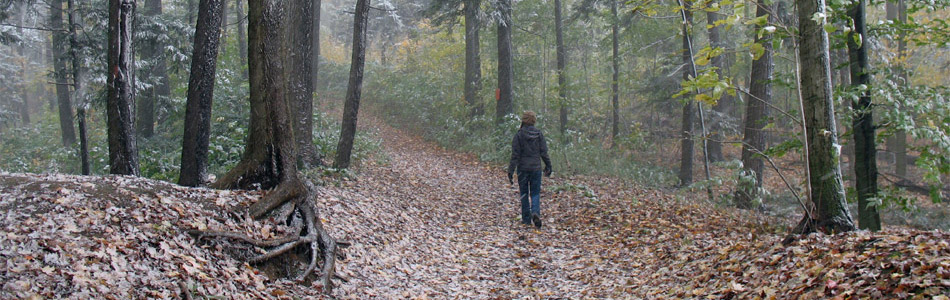 Person Walking in the Snowy Forest - Banner Image
