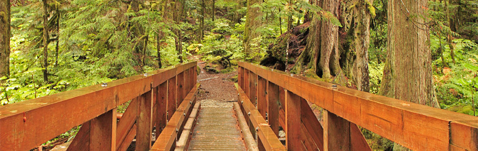 Wooden Bridge in the Redwoods - Banner Image